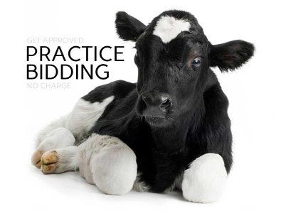 Practice Bidding Bid