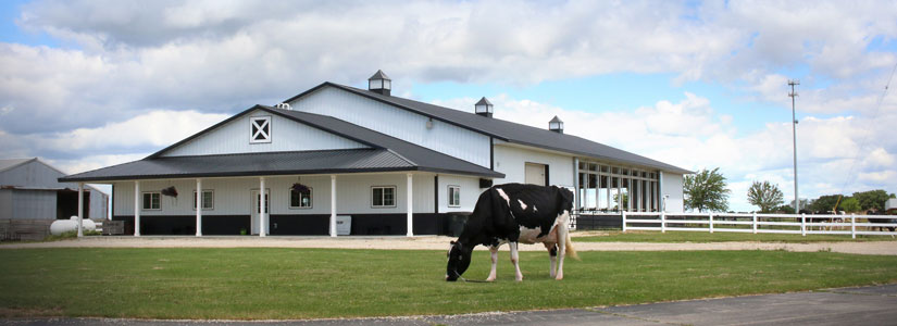 Heritage Holsteins