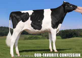 5 Crushabull Embryos x Our-Favorite Confession