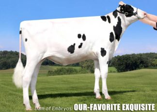 5 Drifter Embryos x Our-Favorite Exquisite
