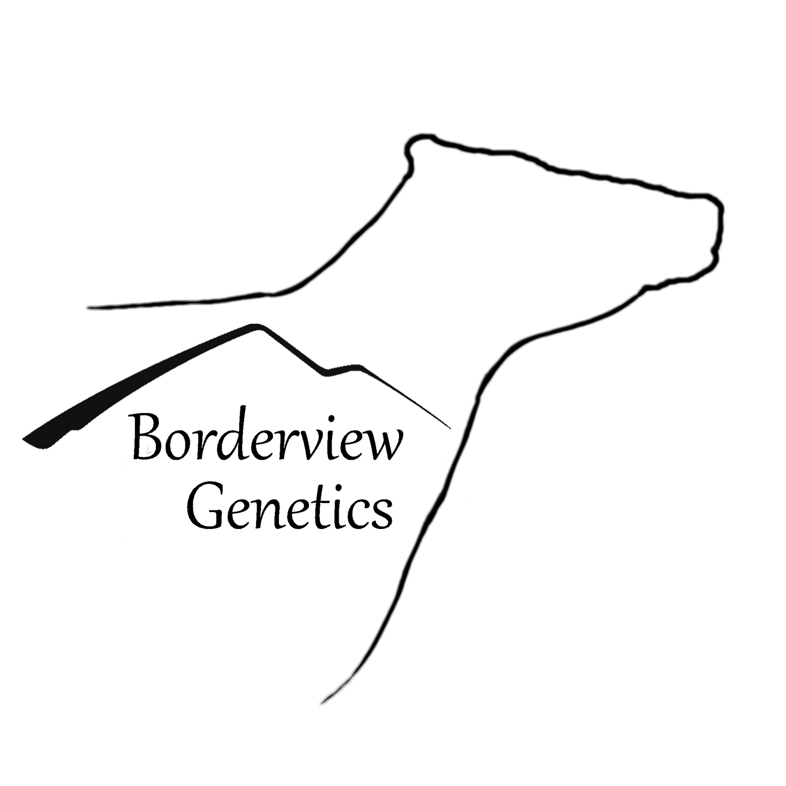 Borderview 2nd Edition Sale