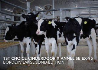1stChoiceCinderdoorXAnnelise
