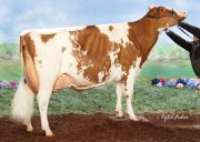 1st Choice Awesome-RED x Redtag Destry Sneezy-RED