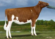 12-#1 Jordy-RED Embryos x SF-Shadylane DK Amazing-RED