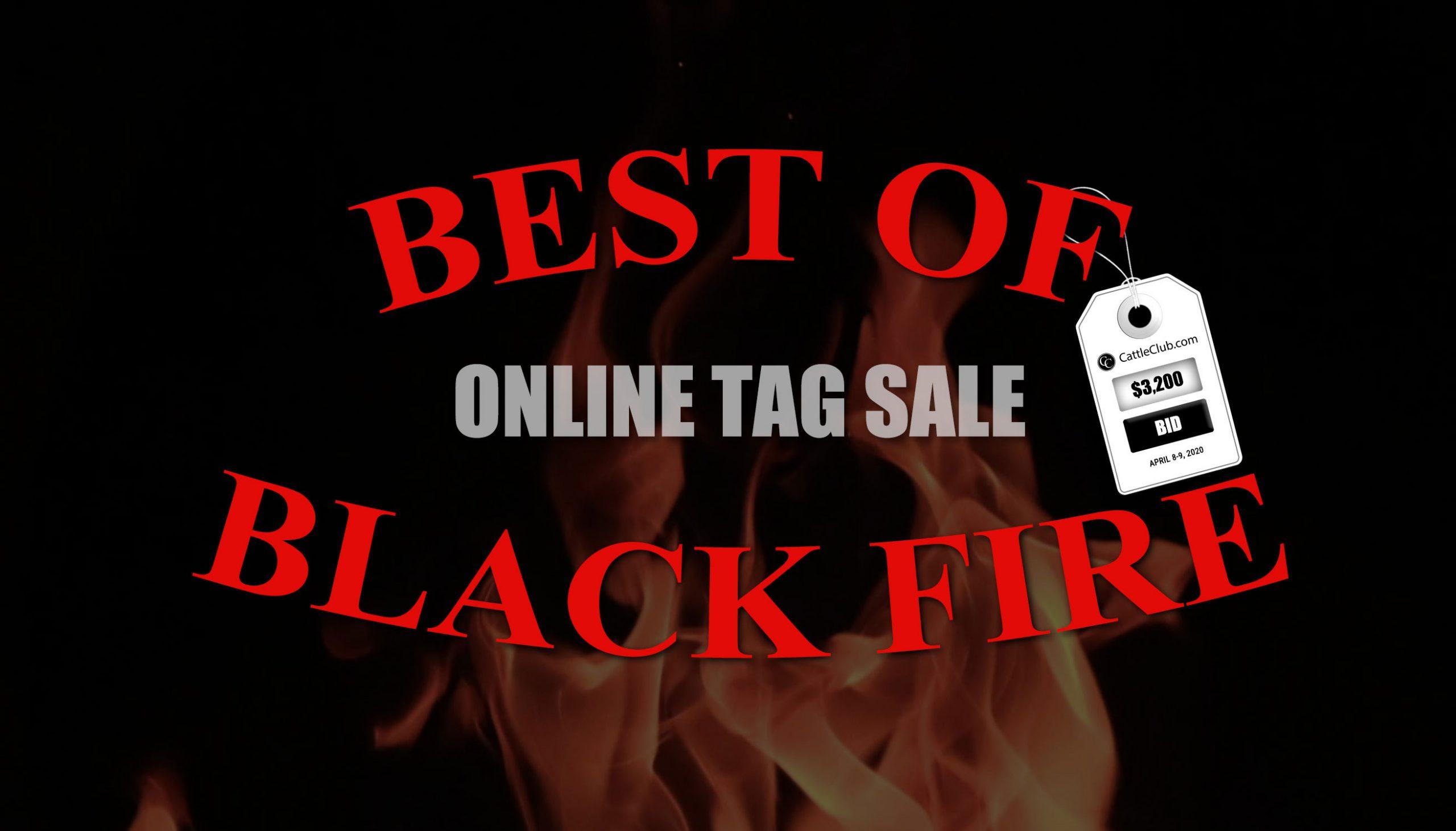 Best of Black Fire Sale