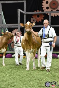 ATOMIC-RED named Reserve Intermediate Champion at WDE