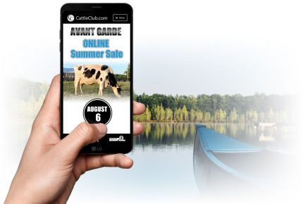 Avant Garde Online Summer Sale