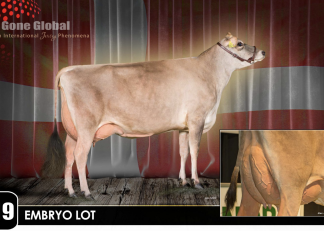 3 #1 Sexed Embryos by HIRTS / QUIT
