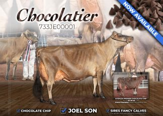 CHOCOLATIER 733JE00001