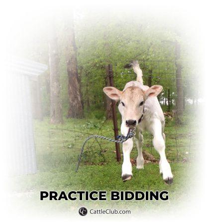 PRACTICE BIDDING