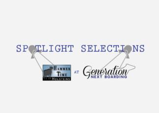 Spotlight Selections