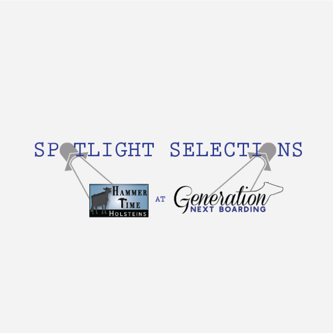 Spotlight Selections