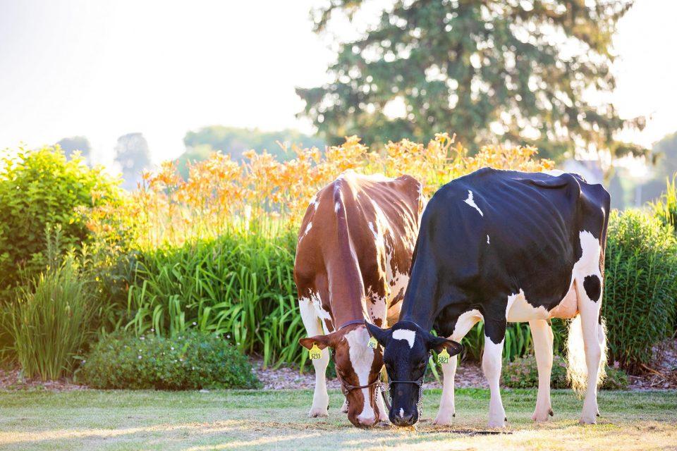 Synergy Dairy