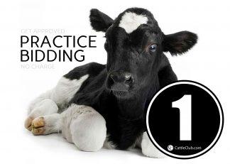 Practice Bidding Lot 1
