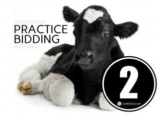Practice Bidding Lot 2