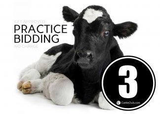 Practice Bidding Lot 3