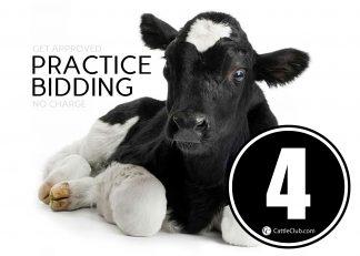 Practice Bidding Lot 4