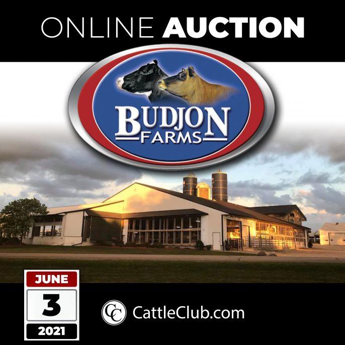 Budjon-ONLINE-AUCTION